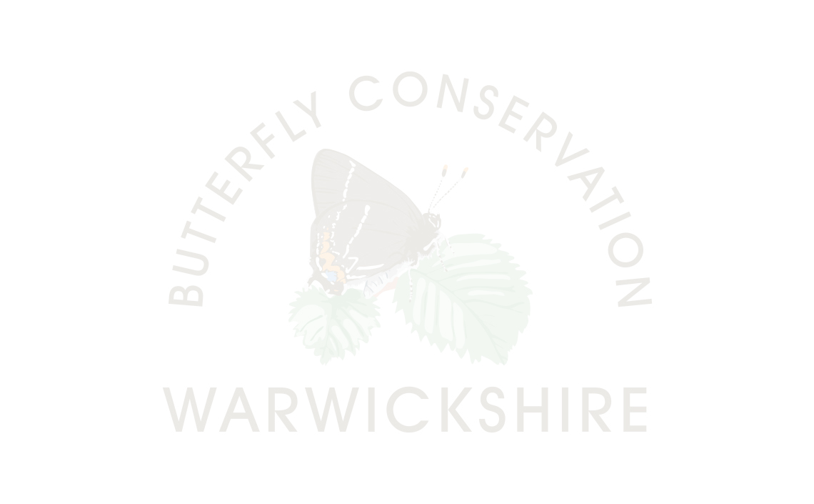 Phil Parr awarded Outstanding Volunteer Award by Butterfly Conservation.